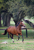 HOR 01 DS0002 01