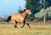 HOR 01 DS0003 01