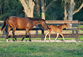 HOR 01 DS0011 01