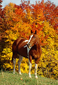 HOR 01 FA0002 01