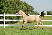 HOR 01 FA0003 01