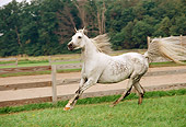 HOR 01 FA0004 01