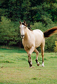 HOR 01 FA0008 01