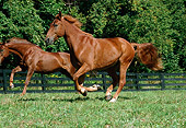 HOR 01 FA0009 01