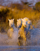 HOR 01 JZ0002 01