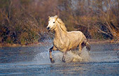 HOR 01 JZ0006 01