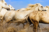 HOR 01 JZ0008 01