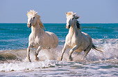 HOR 01 JZ0014 01