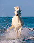 HOR 01 JZ0015 01