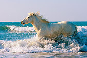 HOR 01 JZ0016 01