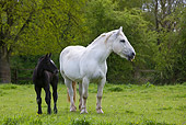 HOR 01 KH0001 01