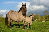 HOR 01 KH0004 01