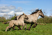 HOR 01 KH0005 01