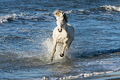 HOR 01 KH0008 01