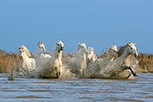 HOR 01 KH0011 01