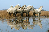 HOR 01 KH0012 01