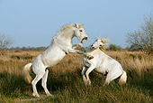 HOR 01 KH0015 01