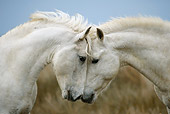 HOR 01 KH0019 01
