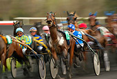 HOR 01 KH0029 01