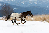 HOR 01 KH0033 01