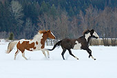 HOR 01 KH0036 01