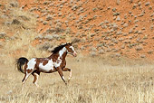 HOR 01 KH0037 01