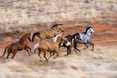 HOR 01 KH0043 01