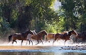 HOR 01 KH0049 01