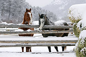 HOR 01 KH0052 01