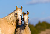 HOR 01 KH0053 01