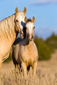 HOR 01 KH0054 01