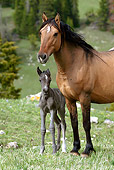 HOR 01 KH0055 01