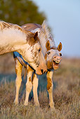 HOR 01 KH0056 01