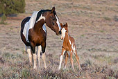 HOR 01 KH0060 01