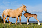 HOR 01 KH0061 01