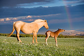 HOR 01 KH0062 01