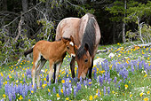HOR 01 KH0063 01