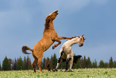 HOR 01 KH0067 01