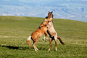 HOR 01 KH0068 01