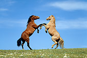HOR 01 KH0069 01