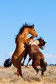 HOR 01 KH0070 01