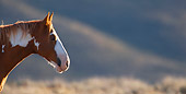 HOR 01 KH0076 01