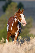 HOR 01 KH0077 01