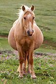 HOR 01 KH0078 01