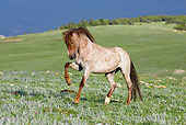 HOR 01 KH0087 01