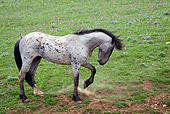 HOR 01 KH0088 01