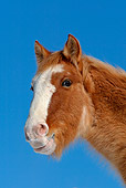 HOR 01 KH0089 01