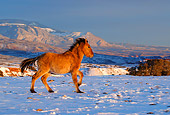 HOR 01 KH0090 01