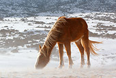 HOR 01 KH0092 01