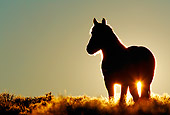 HOR 01 KH0094 01